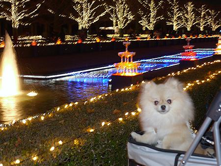 2009/12/6 昭和記念公園イルミ8