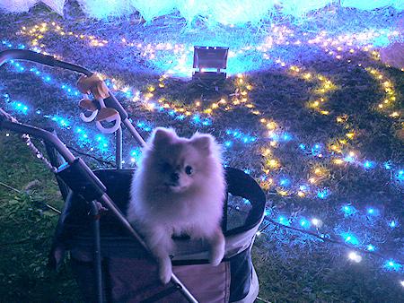2009/12/6 昭和記念公園イルミ20