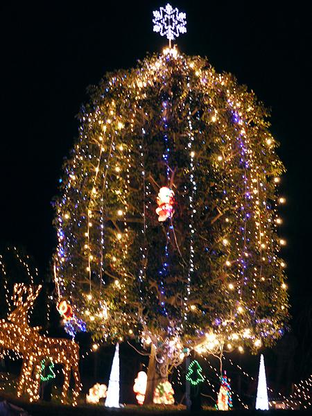 2009/12/9 松田山きらきらフェスタ13