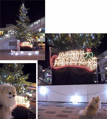 2009/12/25 東海大前クリスマスツリー