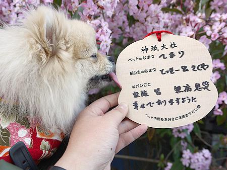 2010/1/2 神祇大社7
