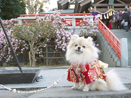 2010/1/2 神祇大社11
