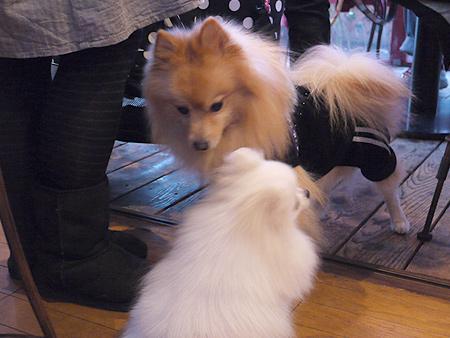 2009/1/13 ダイニングカフェ・ラフレシア25