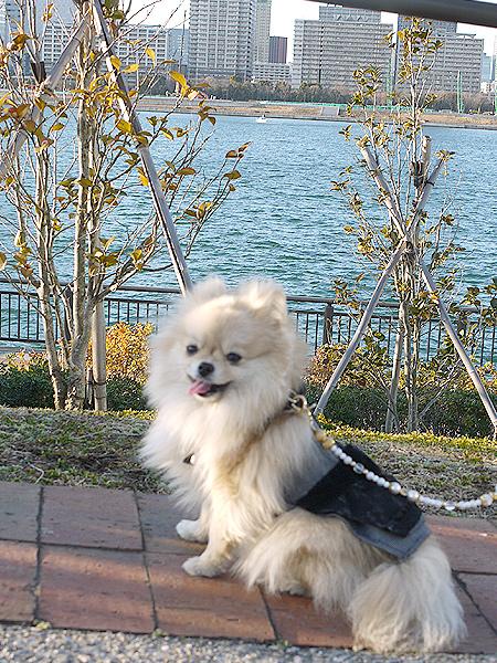2010/1/16 豊洲公園1