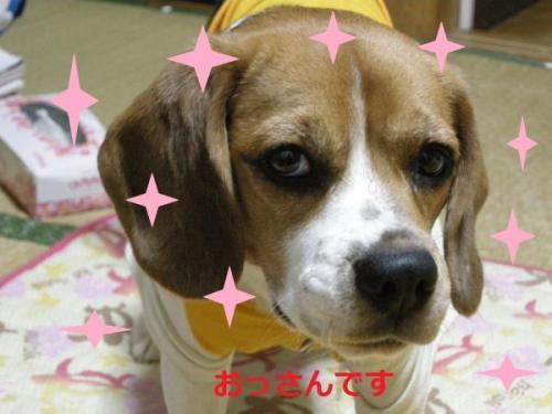 縺翫▲縺輔s_convert_20111012191940