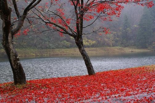 11/23水源地の紅葉1