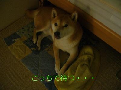P1020089no2.jpg