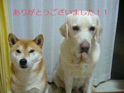 P1020111no2.jpg