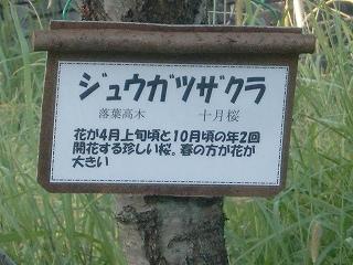 t-0914.jpg