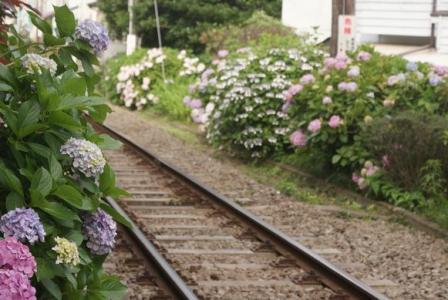 線路と紫陽花