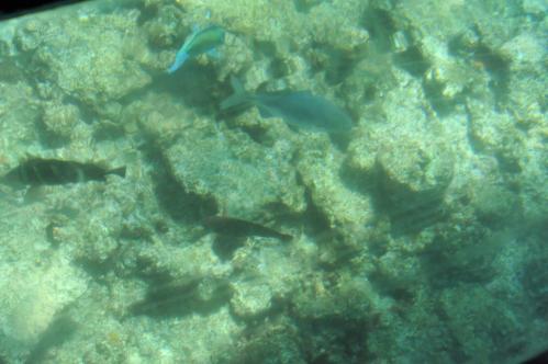 沖縄12s