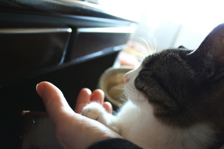 猫が暖房・人が暖房