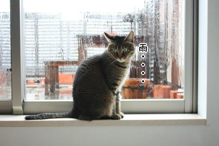 雨・・・・