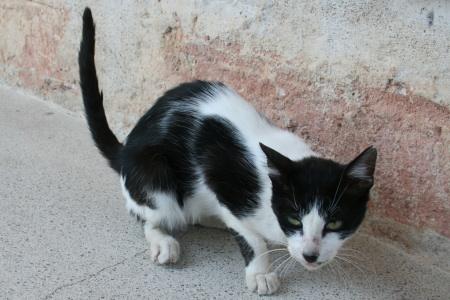 スパルタ猫