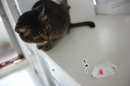 発見されたうウサ毛ネズミ