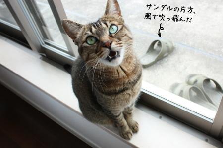 みゃーみゃーみゃーみゃーみゃー!みゃお~ん!みゃうわう!ニャウ!にゃ~~お~~!わおーん!