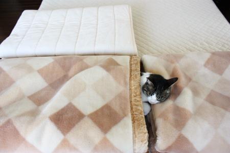 ちび入りボア毛布