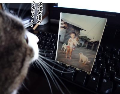子ミルラと子犬