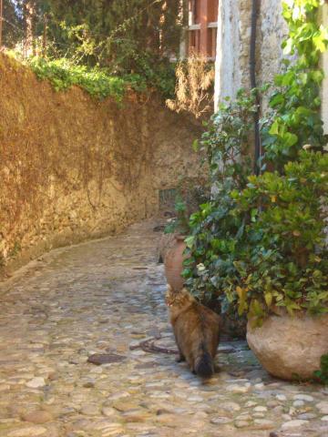 kitty walk