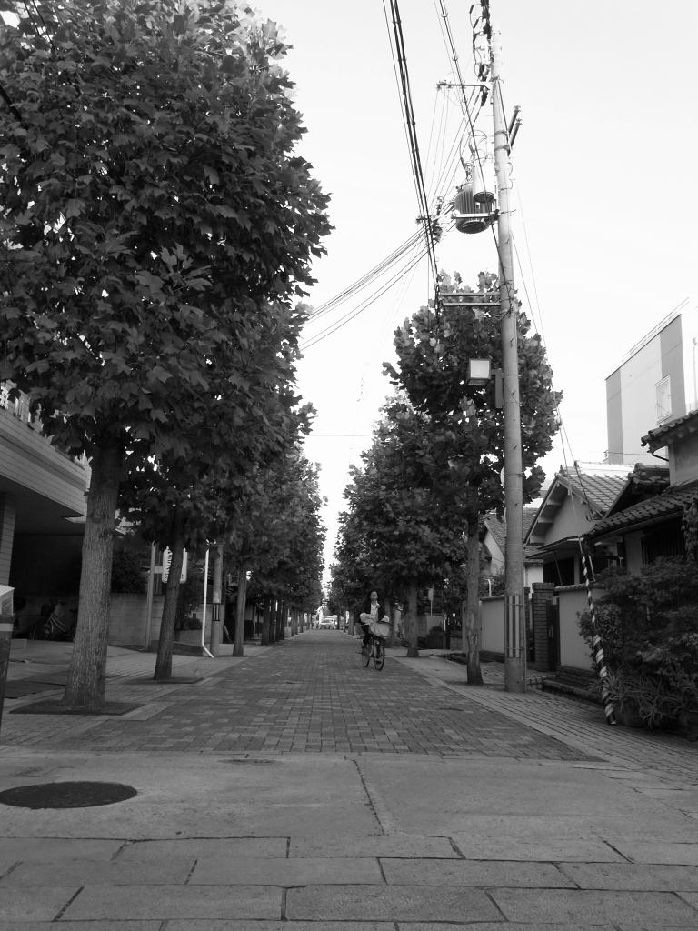 白黒のポプラ並木。