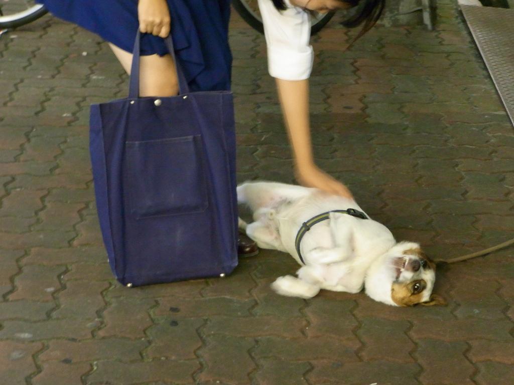 完璧にふっ飛んでる犬。