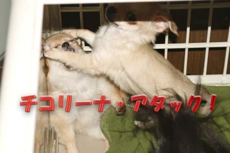 15_20110811111337.jpg