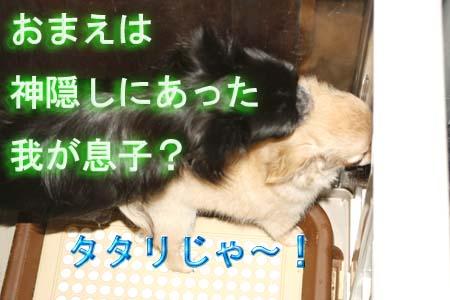 3_20110811111302.jpg