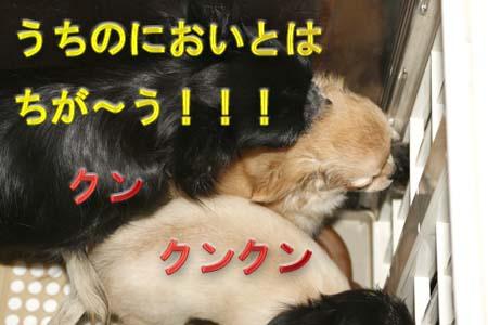 5_20110811111302.jpg