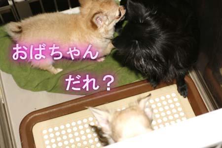 7_20110811111301.jpg