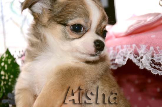 Aisha0.jpg