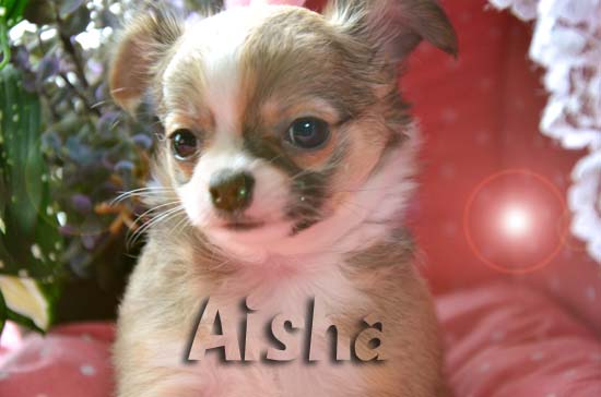 Aisha1.jpg