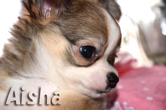 Aisha5.jpg