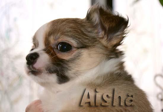Aisha6.jpg