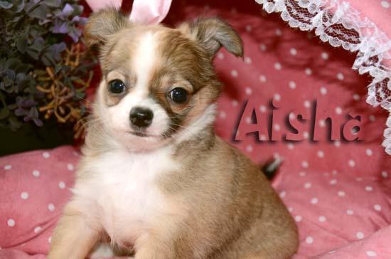 Aisha7.jpg