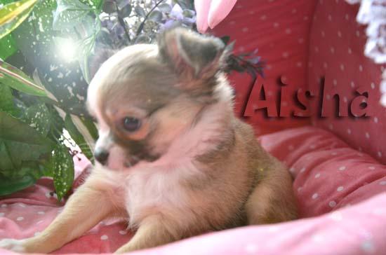 Aisha9.jpg