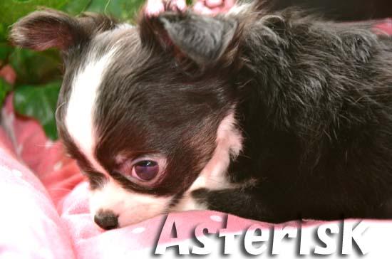 Asterisk1.jpg