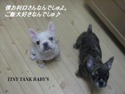 12月26日babys