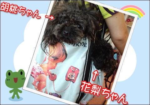 11_20110719160409.jpg