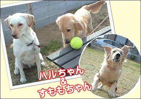 4_20091109113417.jpg