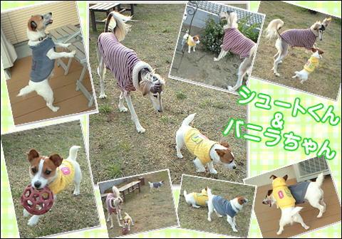 5_20091109134109.jpg