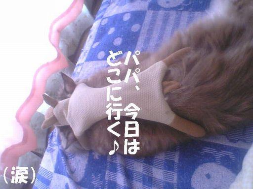 otousannnimonatuyasumiwo~~~