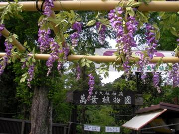 萬葉植物園1