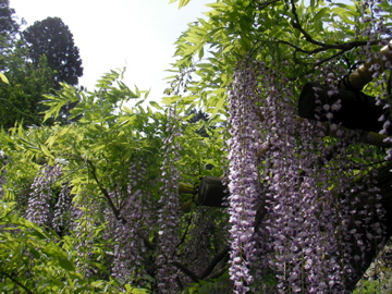 萬葉植物園4