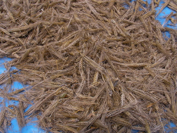 もち麦11