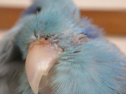 アップ!別鳥じゃーん