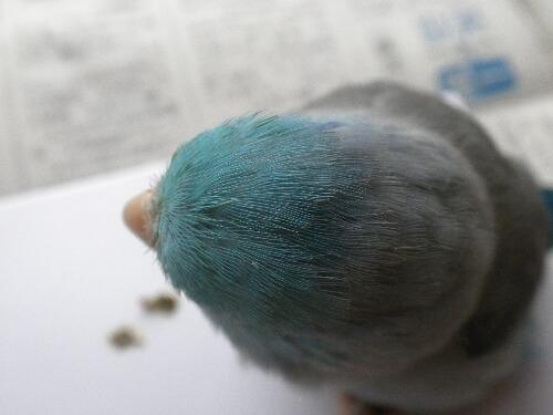 鳥あたま。