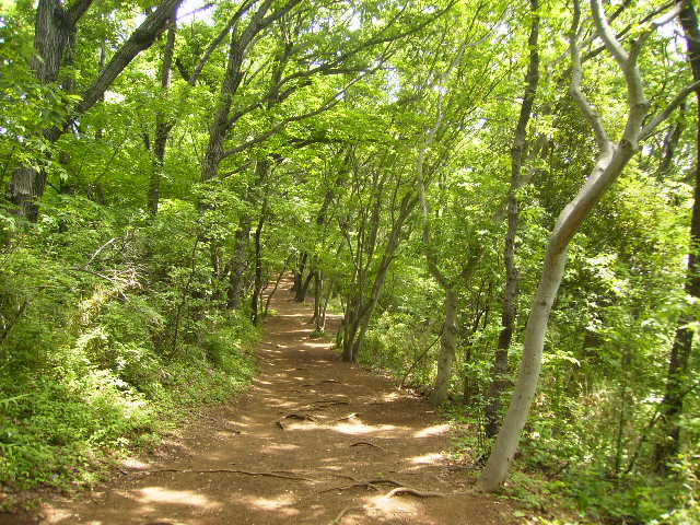 新緑の山道73