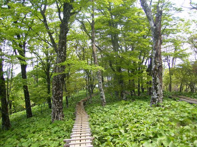 新緑の木道376