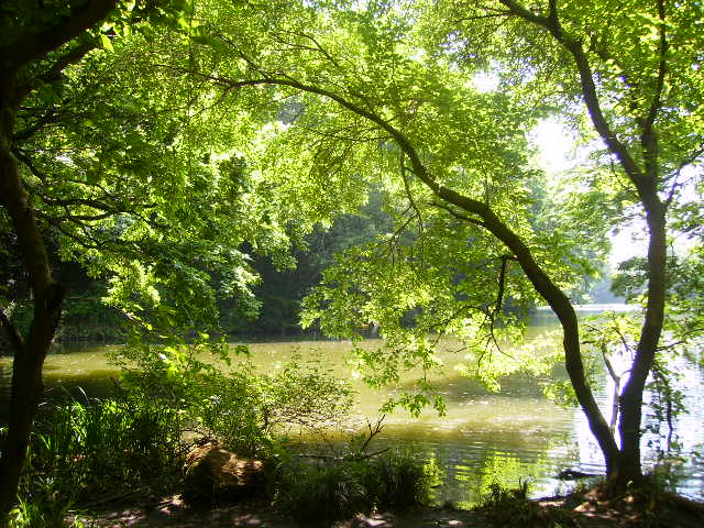 湖畔の緑123