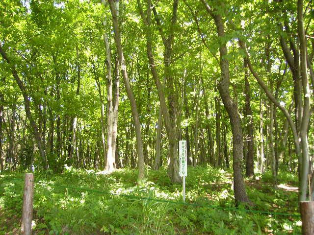 緑の林177